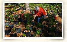 Photo of gardener with plants